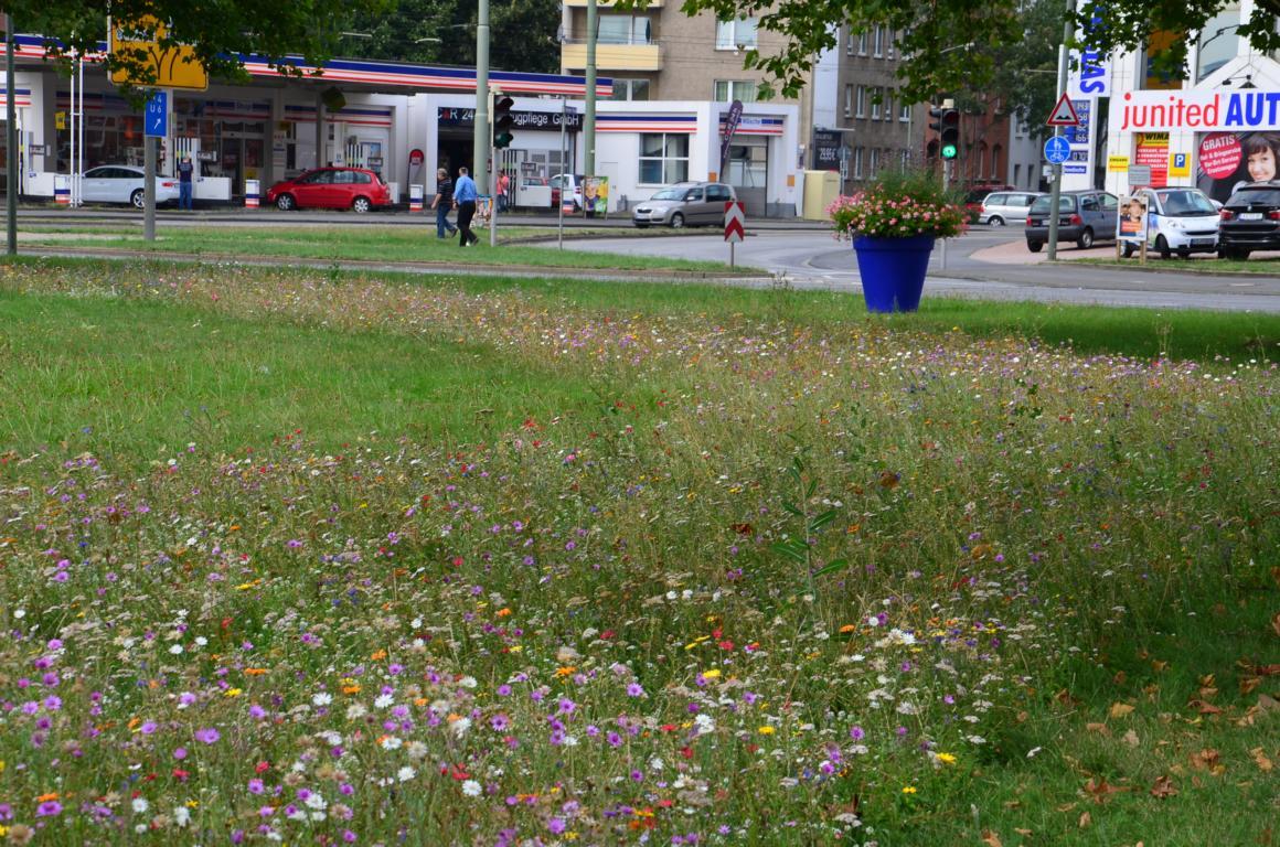 Kasseler Blühflächen