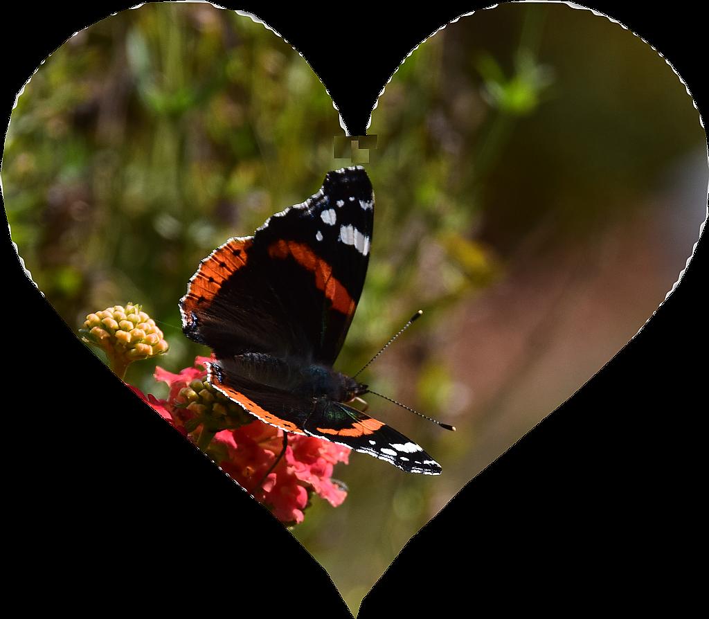 Ein Herz für Schmetterlinge, Bienen und Hummeln